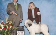 Sailor Best of Breed West Allis Show